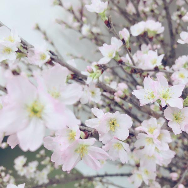 熊本中央リース ブログ
